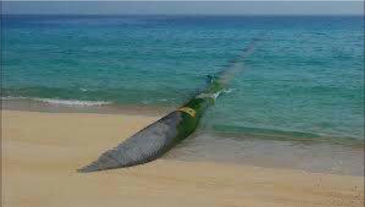 هزینه 15 هزار میلیاردی انتقال آب از دریای عمان به استانهای شرق کشور