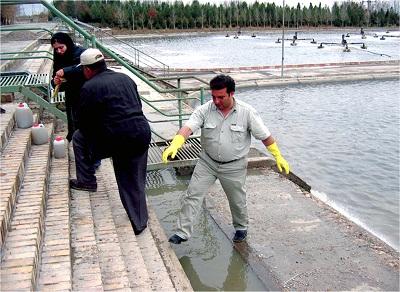 آزمايش هاي مطالعات ارزيابی اثرات زيست محيطی جايگزينی پساب تصفيه شده با منابع آب کشاورزی دشت مشهد